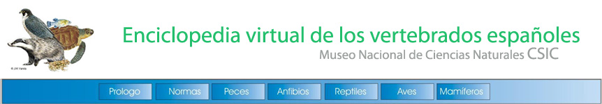 Enciclopedia Virtual de los vertebrados españoles